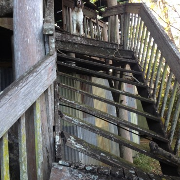 At the back of the barn, the stairs to the old tree house were rotted out-even Sam was hesitant to walk on them!