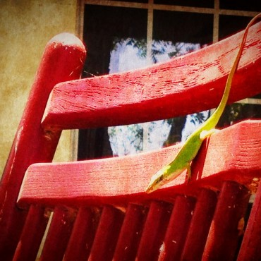 A little gecko on my old red rocker.