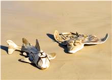 Port Jackson Shark and Ray Sculptures by Lyndall Bensley