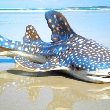 Whale Shark Sculpture by Lyndall Bensley